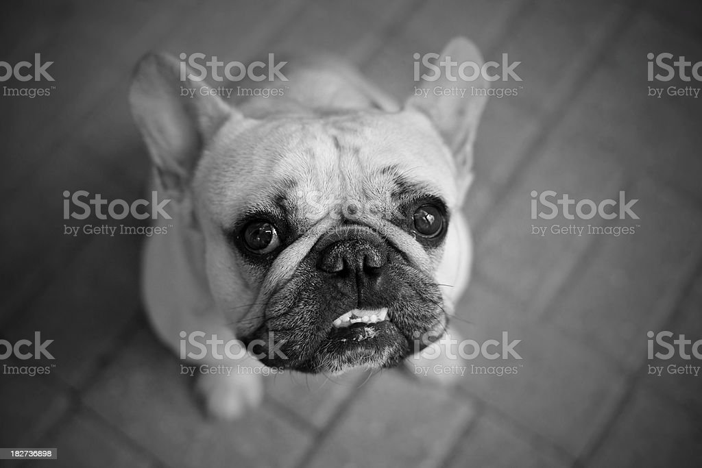 Adorable and loyal stock photo