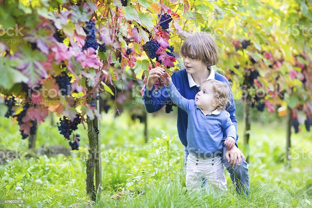 Adorable baby girl and her brother playing in vine yard stock photo