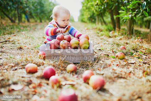 istock Adorable baby girl sitting on the ground near crate full of ripe apples 1095403168