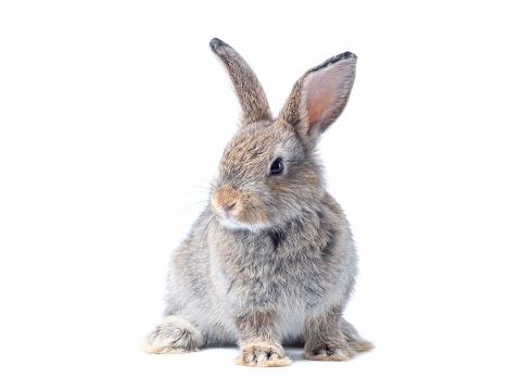 Baby of orange rabbit on white background