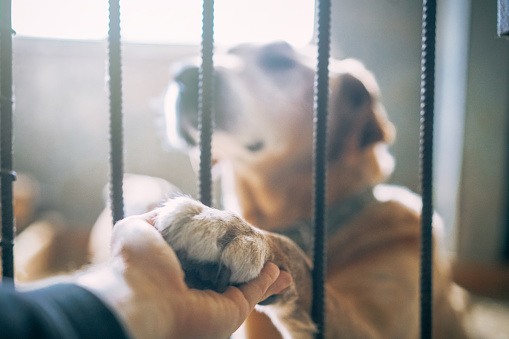 Adorable big mixed breed dog giving his paw to a man through the lattice while sitting in shelter kennel.