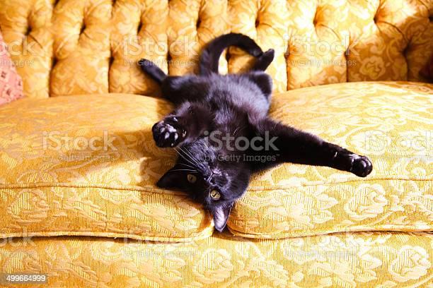 Adorable black cat lying on gold couch picture id499664999?b=1&k=6&m=499664999&s=612x612&h=t ndd31uhj7xzcv8qhhrt21cjrowgmbyuhq lshbmo4=