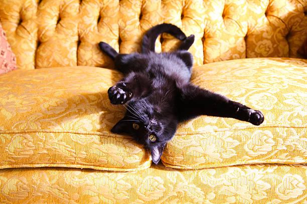 Adorable black cat lying on gold couch picture id499664999?b=1&k=6&m=499664999&s=612x612&w=0&h=ma55eosgf4 csdxkorclf9whyurexaindnctgu2lb4u=