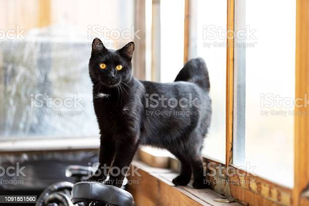 Adorable black cat walks on balcony at afternoon picture id1091851560?b=1&k=6&m=1091851560&s=612x612&h=w2w akx qlnpmj2m8akrwstc4v43hwppjzqt8cei0pw=