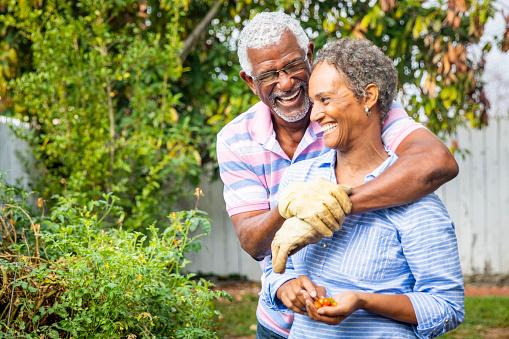 A cute senior black couple working in the garden