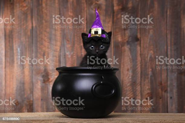 Adorable black halloween witch cat picture id675488890?b=1&k=6&m=675488890&s=612x612&h=bakpc41mwm5z5v3ljrjze v3tlkolzqubiwax9bdfai=
