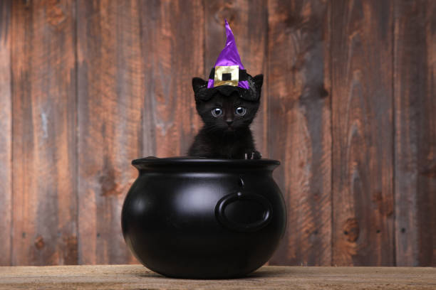 Adorable black halloween witch cat picture id675488890?b=1&k=6&m=675488890&s=612x612&w=0&h=sj hdf jhg5riwt3xppf4x1 2umwtr1womibe33juuw=