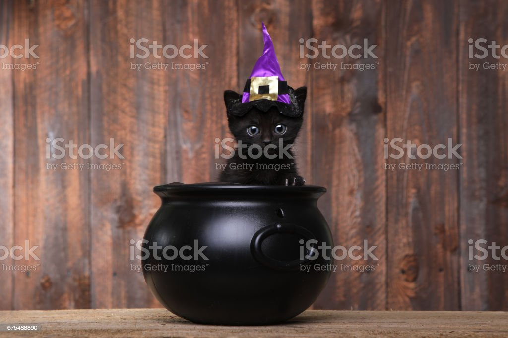 Adorable Black Halloween Witch Cat stock photo
