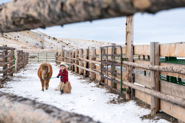 adorable boy in chaps and cowboy hat leads a miniature horse - montana western usa stock pictures, royalty-free photos & images