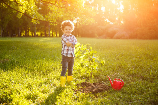 Adorable boy proud with planting tree stock photo