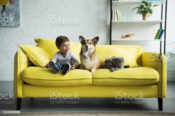 Adorable boy with welsh corgi dog and scottish fold cat sitting on picture id1044929396?b=1&k=6&m=1044929396&s=612x612&h=fb3zqpq076ksqe42l3c42h1nwoqiee p 5fygi7zto4=