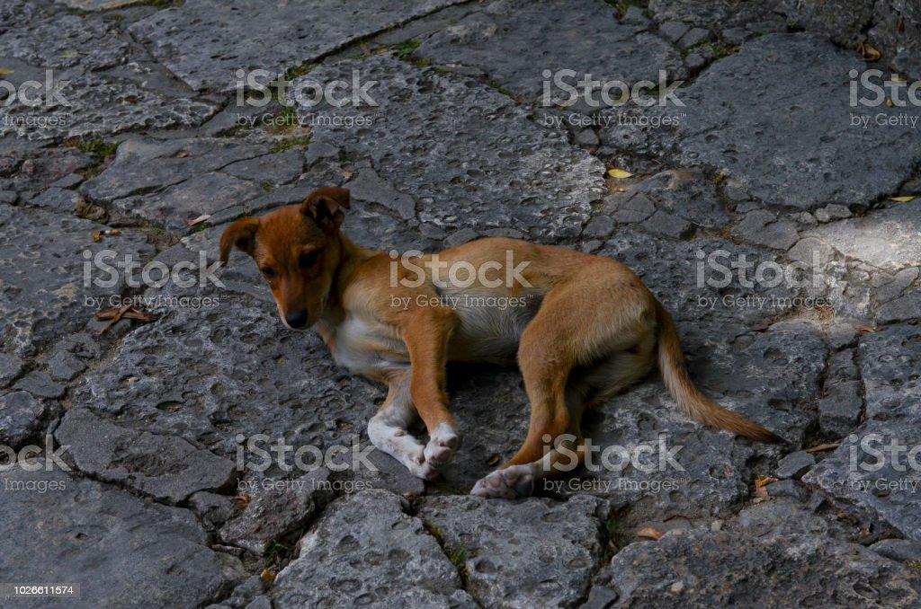 Entzückende Braun Homelss Hund Auf Einem Steinigen Weg Liegen Und An
