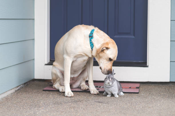 Adorable bunny and medium-size dog hanging out together on front porch stock photo