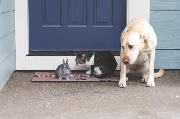 Adorable bunny mediumsize dog and cat hanging out together on front picture id696396182?b=1&k=6&m=696396182&s=612x612&w=0&h=0r hlmwilzggnnafnjj rifcnj08dv0z5wipu8l6ru8=