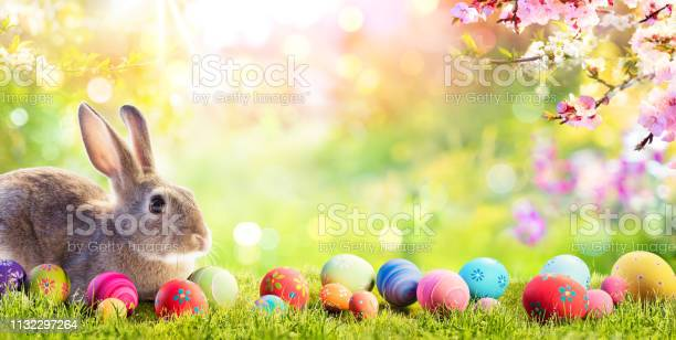 Adorable bunny with easter eggs in flowery meadow picture id1132297264?b=1&k=6&m=1132297264&s=612x612&h=gc j6qtal4zuc7ikrjtjsrwmcy79fnvfipujtremsee=