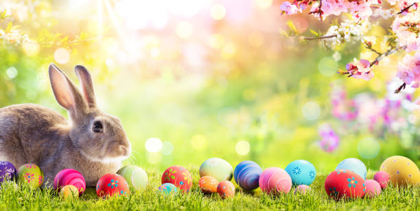 Adorable Bunny With Easter Eggs In Flowery Meadow Little Rabbit With Easter Eggs In Flowery Meadow April stock pictures, royalty-free photos & images