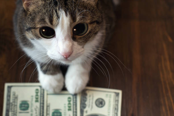 Adorable cat holds dollar banknotes with her paws and looks into the camera with her big eyes Adorable cat holds dollar banknotes with her paws and looks into the camera with her big eyes. pleading stock pictures, royalty-free photos & images