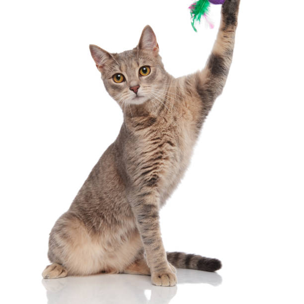 Adorable cat playing with toy with its paw picture id1038759368?b=1&k=6&m=1038759368&s=612x612&w=0&h=s2lek5ckarg0dnqzwqqkvojrbtnikqqhseo8ix mml0=