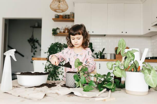 Entzückende Kind Mädchen pflanzt eine Zimmerpflanze in Topf zu Hause. – Foto