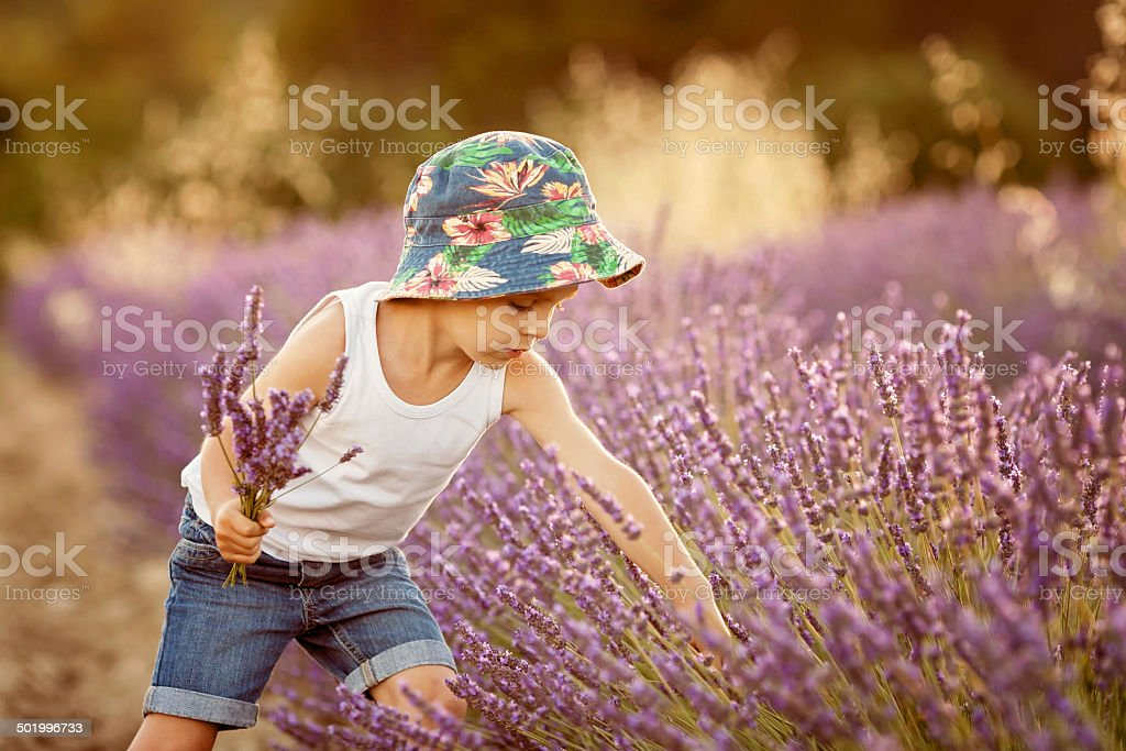 Adorable cute boy with hat in a lavender field stock photo