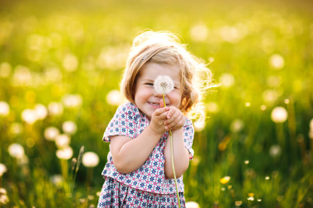 adorable cute little baby girl blowing on a dandelion flower on the nature in the summer. happy healthy beautiful toddler child with blowball, having fun. bright sunset light, active kid. - alegria imagens e fotografias de stock