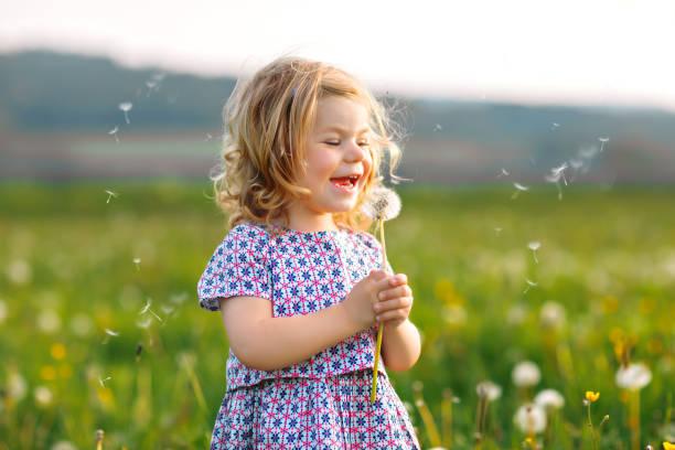 Entzückende niedliche kleine Baby-Mädchen bläst auf einem Löwenzahn Blume auf der Natur im Sommer. Glücklich gesunde schöne Kleinkind Kind mit Blowball, Spaß haben. Helles Sonnenuntergangslicht, aktives Kind. – Foto