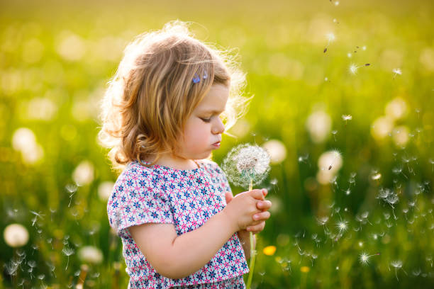 Adorable cute little baby girl blowing on a dandelion flower on the nature in the summer. Happy healthy beautiful toddler child with blowball, having fun. Bright sunset light, active kid. stock photo