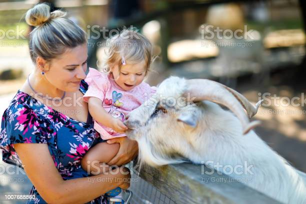 Adorable cute toddler girl and young mother feeding little goats and picture id1007688860?b=1&k=6&m=1007688860&s=612x612&h=dlz5lyggnwemppsdnpmekgh650y3vgnso1o2ee4xdwa=