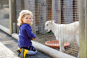 Adorable cute toddler girl feeding little goats and sheeps on a kids farm. Beautiful baby child petting animals in the zoo. Excited and happy girl on family weekend.