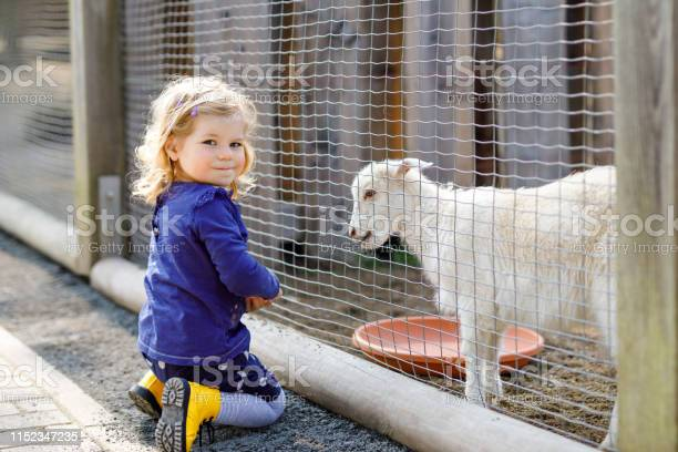 Adorable cute toddler girl feeding little goats and sheeps on a kids picture id1152347235?b=1&k=6&m=1152347235&s=612x612&h=llkw2expumquaj1vj6heyiav2qkkhxzmp46mxzqwuzm=