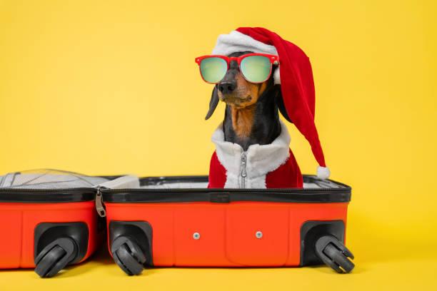 Adorable dachshund dog in santa costume and hat sunglasses is sitting picture id1290180369?b=1&k=6&m=1290180369&s=612x612&w=0&h=ef5tvwsqwckyxf9xij djehpxcy33tikbdswjubjam8=