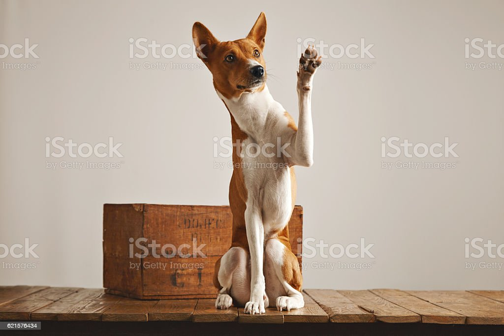 Adorable dog giving his paw photo libre de droits