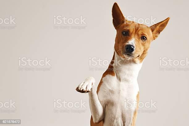 Adorable dog giving his paw picture id621576472?b=1&k=6&m=621576472&s=612x612&h=tjkdnc4b1q0ztyjyzigaxj1ikprpl4rjrbq1xsnsqu8=