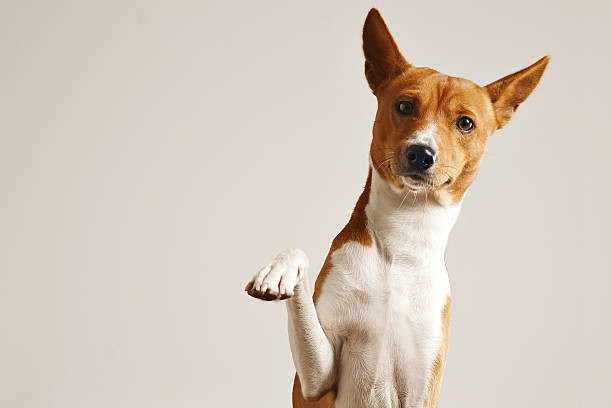 Adorable dog giving his paw stock photo