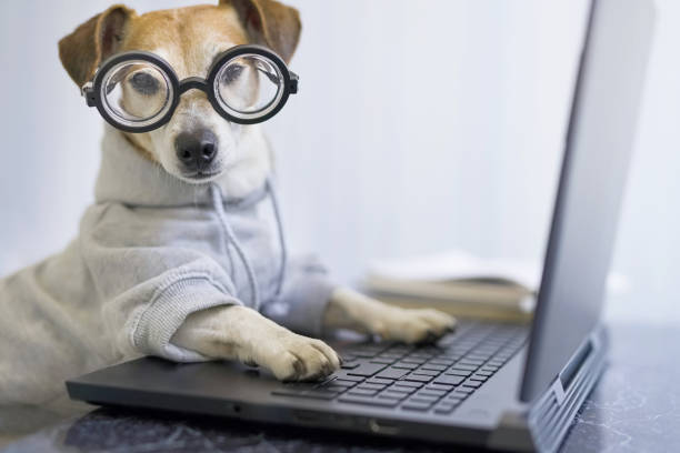 Adorable dog in glasses working with computer picture id1214325113?b=1&k=6&m=1214325113&s=612x612&w=0&h= o0ldoq5gupdywoaubzwo1ylkybtdrtyjoeebsr6dbk=