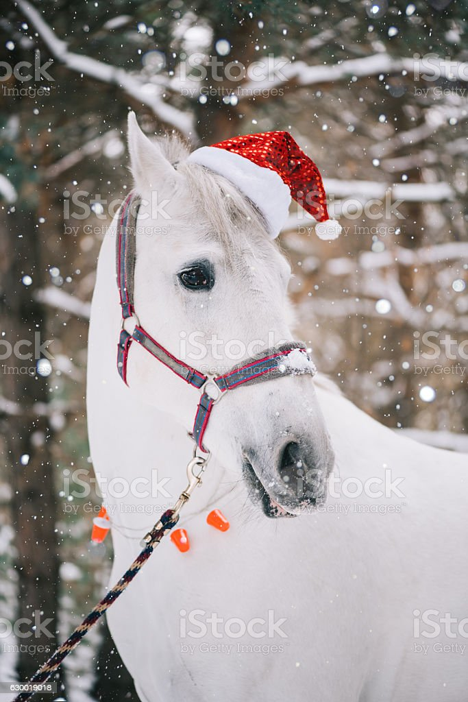 Adorable Festive White Horse Wearing Christmas Hat Stock Photo Download Image Now Istock