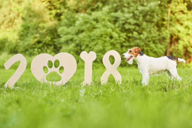 Adorable happy fox terrier dog at the park 2018 new year greetin picture id837211814?b=1&k=6&m=837211814&s=612x612&w=0&h=3dyprz rc0pv 8mr6tlfaw9py1 iwbryy ez164nphu=