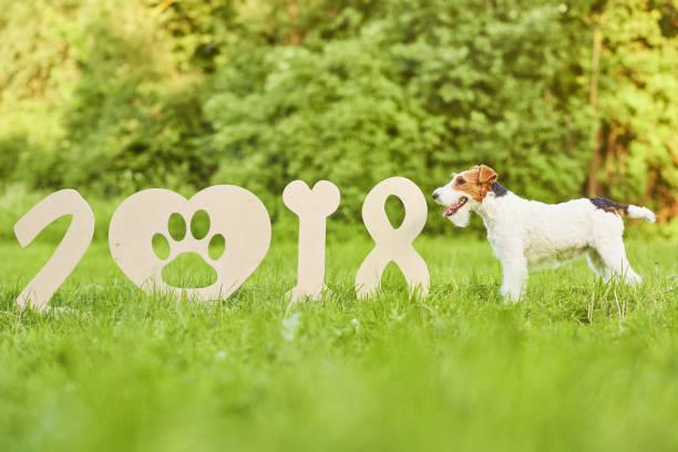 entzückende glücklich fox terrier hund im park 2018 neujahr grußkar - chinesischer kalender stock-fotos und bilder