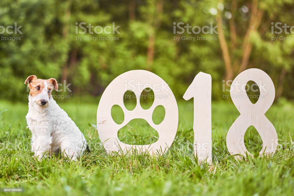 Adorable happy fox terrier dog at the park 2018 new year greetin stock photo