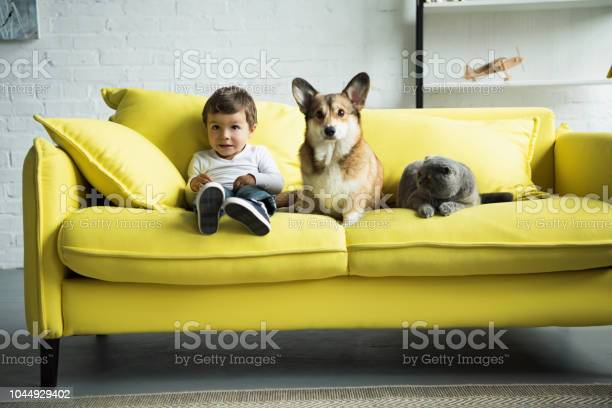 Adorable kid with dog and cat sitting on yellow sofa at home picture id1044929402?b=1&k=6&m=1044929402&s=612x612&h=aa wt9glovsiy7auoxust7dmmcbsimmfaqk32hhctyo=