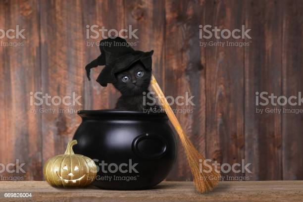 Adorable kitten dressed as a halloween witch with hat and broom in picture id669826004?b=1&k=6&m=669826004&s=612x612&h=aqi721kzduckamzpxqbgqgsioxsgd cvl4iyffm2oqa=