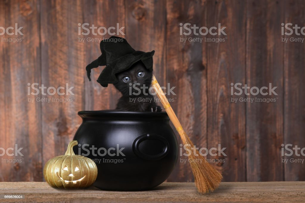 Adorable Kitten Dressed as a Halloween Witch With Hat and Broom in Cauldron stock photo