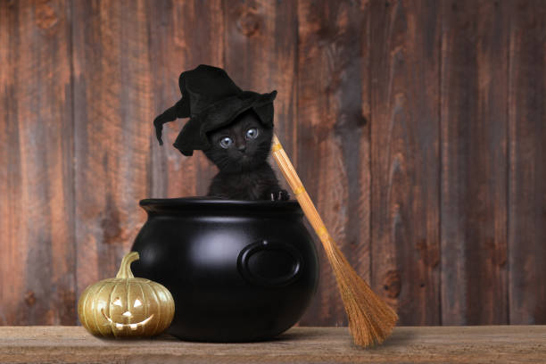 Adorable Kitten Dressed as a Halloween Witch With Hat and Broom in Cauldron Cute Kitten Dressed as a Halloween Witch With Hat and Broom in Cauldron halloween cat stock pictures, royalty-free photos & images