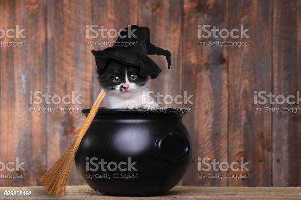 Adorable kitten dressed as a halloween witch with hat and broom in picture id669828462?b=1&k=6&m=669828462&s=612x612&h=ps80shvwbkzyj54b lshgwz9tezvfl0rp8mxxiyi524=
