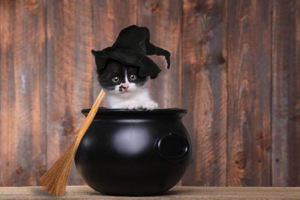 Adorable kitten dressed as a halloween witch with hat and broom in picture id669828462?b=1&k=6&m=669828462&s=612x612&w=0&h=l78b1py7qto9qawfeu8ddcm8k ifviwx4eue1v9xbqy=