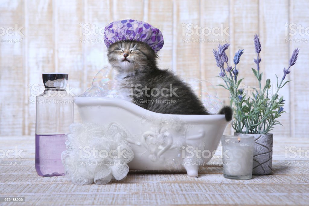 Adorable Kitten in A Bathtub Relaxing - Photo