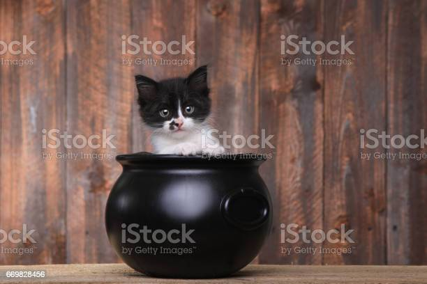 Adorable kitten in halloween cauldron on wood background picture id669828456?b=1&k=6&m=669828456&s=612x612&h=v0nibbylh i6kkhgohhf6nbxifm zxuaxlwt aagwds=