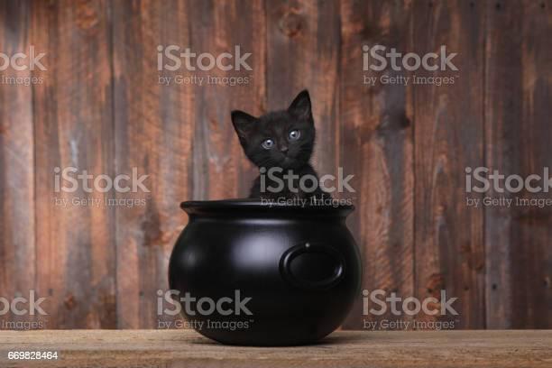 Adorable kitten in halloween cauldron on wood background picture id669828464?b=1&k=6&m=669828464&s=612x612&h=ft6fjutylbw7f6s9qza1zfa1nyxexhd gqnnoj2rapa=