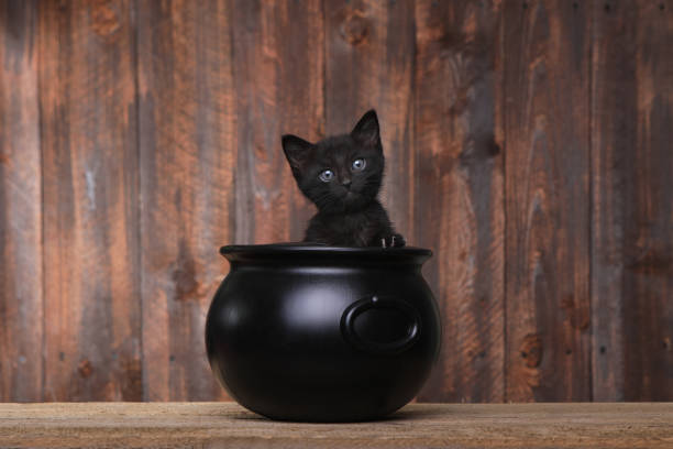 Adorable kitten in halloween cauldron on wood background picture id669828464?b=1&k=6&m=669828464&s=612x612&w=0&h=kde vgrfo86gn qm efgoz83elig3my4d6lqvrjzdge=