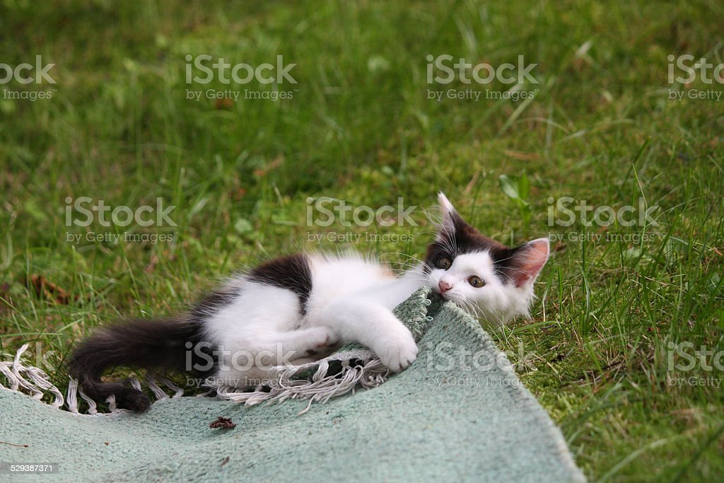 Adorable kitten playing on the rug stock photo